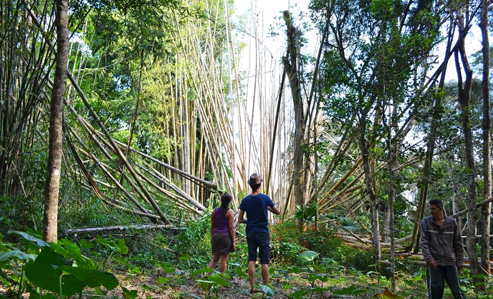 A Ecoativa é um centro eco-cultural localizado na Ilha do Bororé, às margens da Represa Billings que promove o acesso a cultura e a práticas sustentáveis. Crédito:Reprodução
